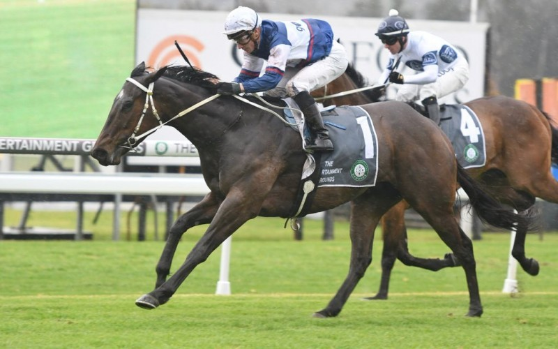 Campari on the comeback in Tauranga Classic